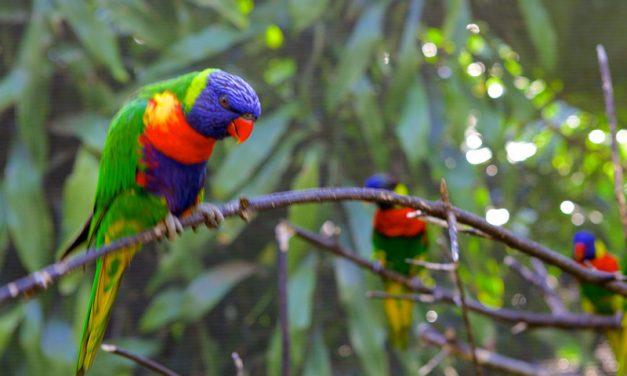 D01 Umgeni Bird Park